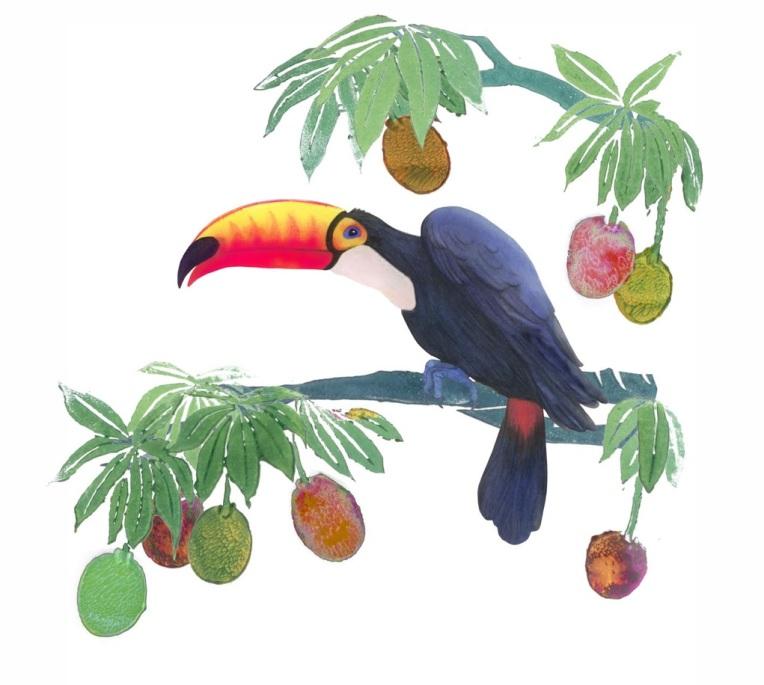 Toucan Branches